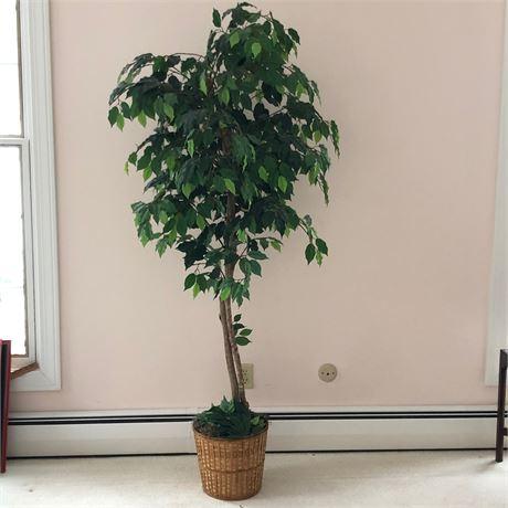 Decorative Artificial Ficus