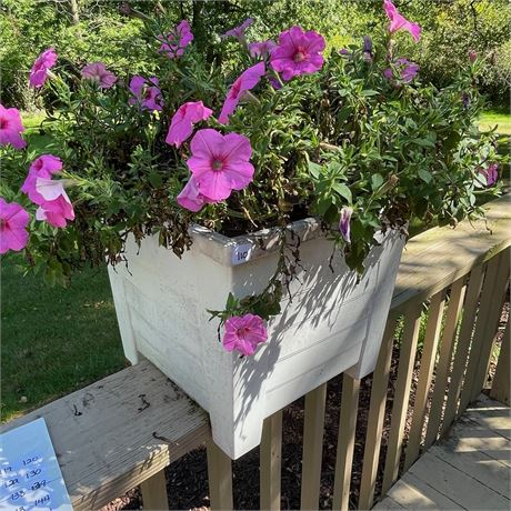 Planter with Live Petunias 4 of 4