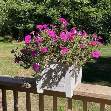 Planter with Live Petunias 1 of 4