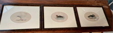 Group of Duck Engravings