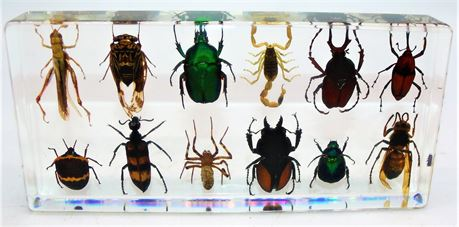 12 Insects in lucite