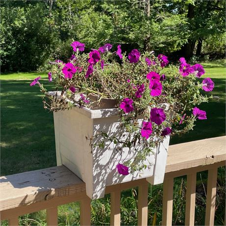 Planter with Live Petunias 2 of 4